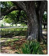 Resting In The Shade Canvas Print