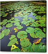 Resting Lilly Pads Canvas Print