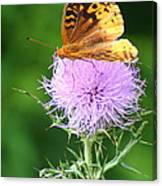 Resting On A Thistle Canvas Print