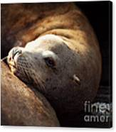 Resting On The Pier Canvas Print