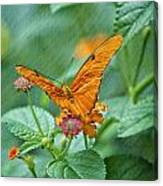 Resting Orange Butterfly Canvas Print