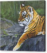 Resting Place - Tiger Cub Canvas Print