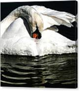Resting Swan Canvas Print