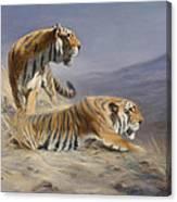 Resting Tigers Canvas Print
