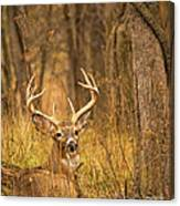 Resting White-tailed Deer Buck Canvas Print
