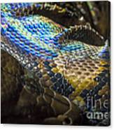 Reticulated Python With Rainbow Scales 2 Canvas Print
