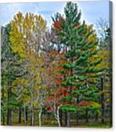 Retreating Pines Canvas Print