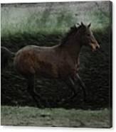 Retro Horse Canvas Print