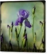 Retro Iris Metting Canvas Print