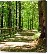 Wooded Path 15 Canvas Print
