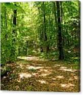 Wooded Path 16 Canvas Print