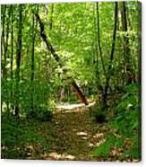 Wooded Path 17 Canvas Print