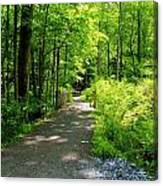 Wooded Path 20 Canvas Print
