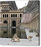 Rhesus Monkeys At An Indian Temple Canvas Print