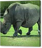 Rhino And Friend Canvas Print