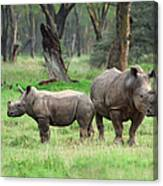 Rhino Family Canvas Print