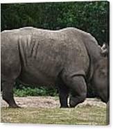 Rhino In The Wild Canvas Print