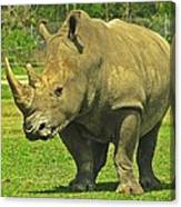 Rhino Look Canvas Print