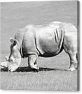 Rhinoceros Charcoal Drawing Canvas Print