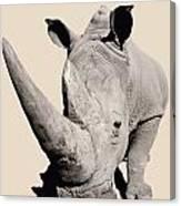 Rhinocerosafrica Canvas Print