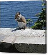Rhode Island Squirrel Canvas Print
