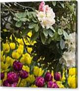 Rhodies And Tulips Canvas Print