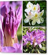 Rhododendron Collage Canvas Print