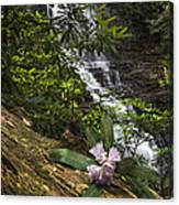 Rhododendron At The Falls Canvas Print