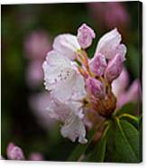 Rhododendron Enborne Canvas Print