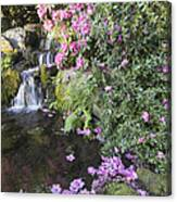 Rhododendron Flowers By Waterfall Canvas Print