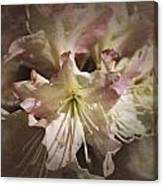 Rhododendron Mary Fleming Canvas Print