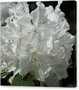 Rhododendron Purity Canvas Print