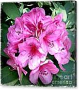 Rhododendron Square With Border Canvas Print