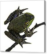 Ribbeting Frog In A Bucket Canvas Print