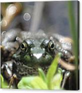 Ribbit Canvas Print