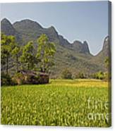 Rice Farm Canvas Print
