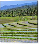 Rice Fields, Bali, Indonesia Canvas Print