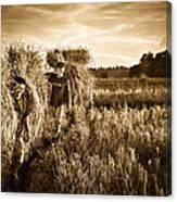 Rice Harvesting Canvas Print
