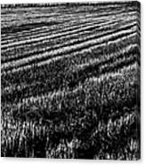 Rice Paddies Canvas Print