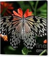 Rice Paper Butterfly Elegance Canvas Print