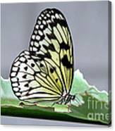Rice Paper Butterfly On A Leaf Canvas Print