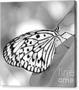 Rice Paper Butterfly Resting For A Second Canvas Print