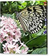 Rice Paper On Flower Canvas Print