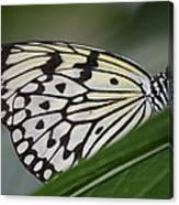 Rice Paper On Leaf Canvas Print