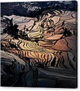 Rice Terrace Field Of Yuan Yang Canvas Print
