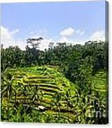 Rice Terrace In Bali Canvas Print