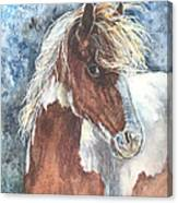 Pinto Pony Canvas Print