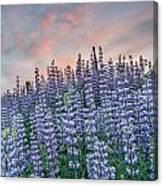 Ridge Of Lupine At Dawn Canvas Print