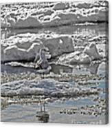 Riding The Ice Flow  Canvas Print