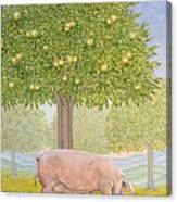Right Hand Orchard Pig Canvas Print